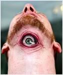 meilleur-tatoueur-nancy-crock-ink-tatouage-yeux-oeil-tattoo